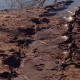 crocodiletracks.kimberley.abc.jpg
