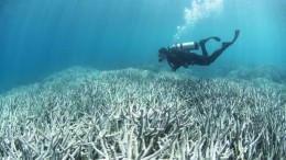 barrierreefheronislandcoralbleaching
