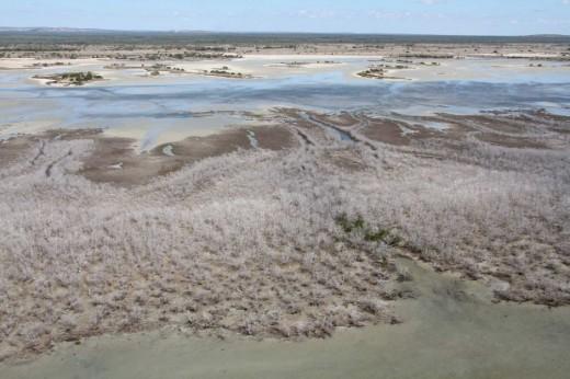 mangrovebleaching.climatechange.normduke.abc