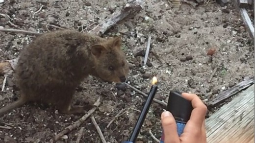 quokkavideo.watoday.fairfax
